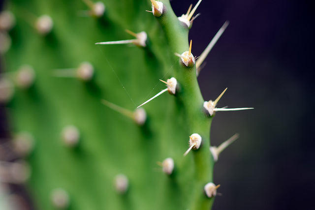 Tricky Prickly Things