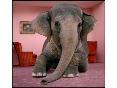 The Elephant in the Room | A Story of Synchronicity