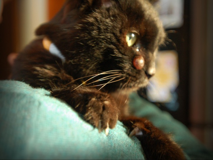 What I Learned About Love from a Sick Stray Cat