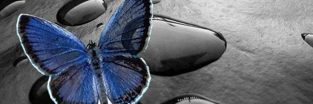 blog-butterfly