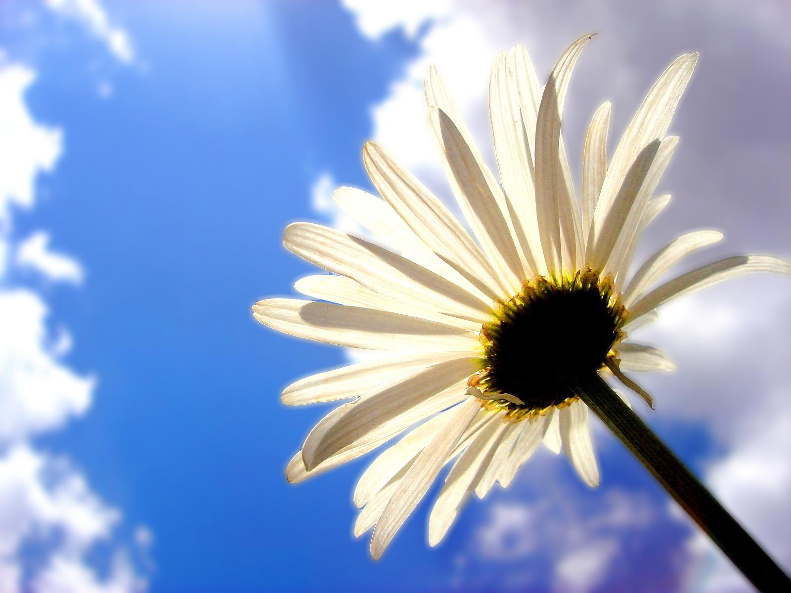 Margarit Flower