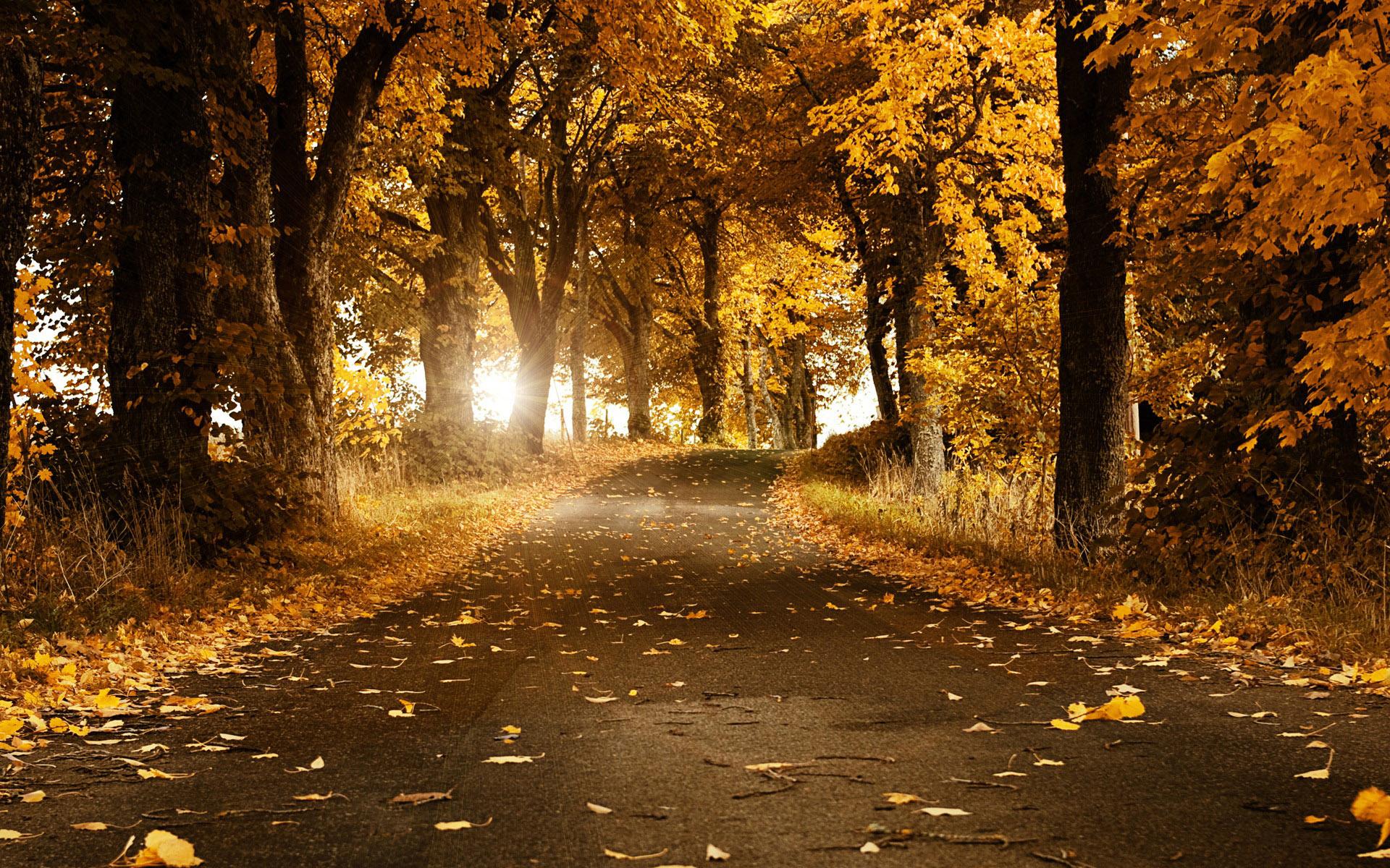 fall-wallpaper-25